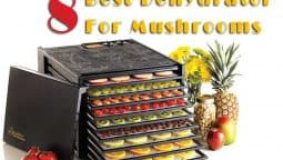 Which is the best? Which will last? Where can you find one that suits your needs? Nesco Food Dehydrator with dried mushrooms. Choose Best Dehydrator For Mushrooms