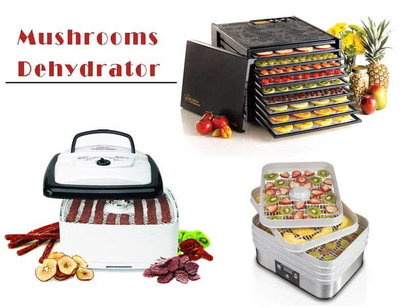 Choose The Best Dehydrator For Mushrooms If you are natural nutrition's food lover