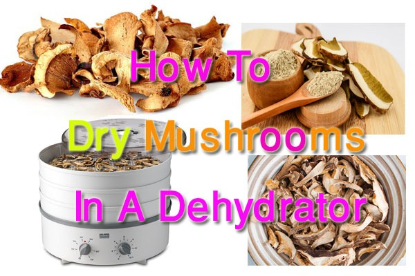 6 Easy Guide To Know How To Dry Mushrooms In A Dehydrator